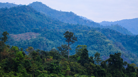 vernal: Tall trees in forest , Thailand Stock Photo
