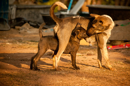 cuteness: The cuteness of dog, mother and baby