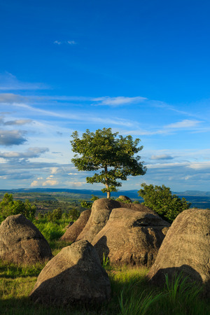 spiritless: Green tree on the mountain