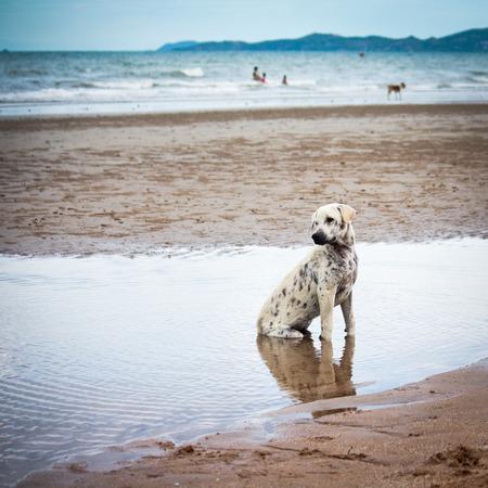 heartsick: little Dog Sitting by the beach