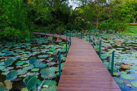 beautiful  view: wood bridge For the Nature Education in  garden