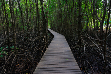 wood bridge in mangroves Chanthaburi Province of Thailand photo