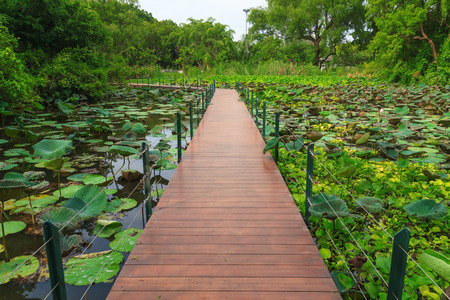 corbel: The wooden bridge in the middle of a lotus pond Stock Photo