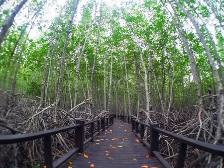 The mangrove forest  in Prachuap Khiri Khan Province Stock Photo - 48338295