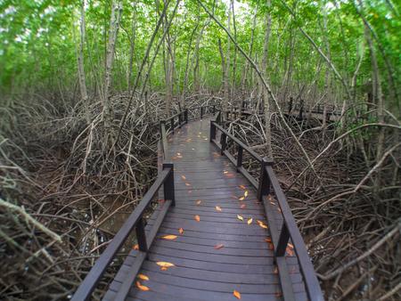 khan: The mangrove forest  in Prachuap Khiri Khan Province