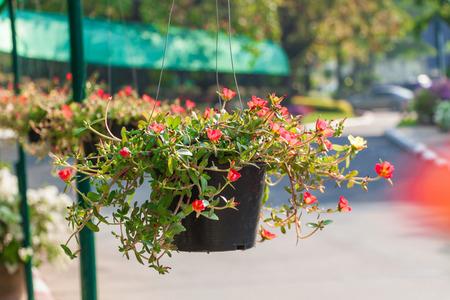 suspend: Flower pot in the garden Stock Photo