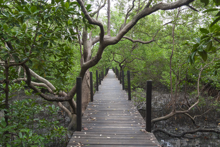 rayong: The mangrove forest  in Rayong Province of Thailand