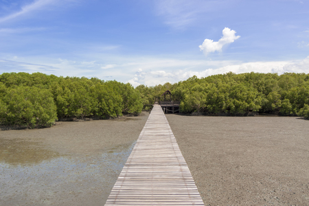 Green mangrove forests in Thailand , Feeling fresh
