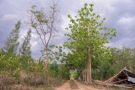 Rural way in Thailand