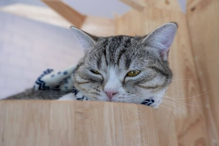 Cute little cat are sleeping