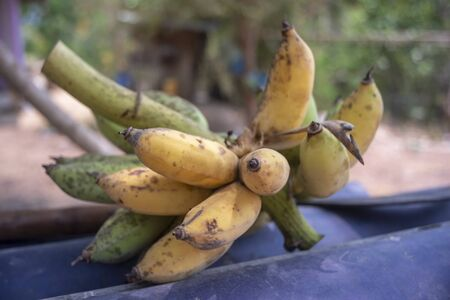 Cultivated banana , Fruit is good for health
