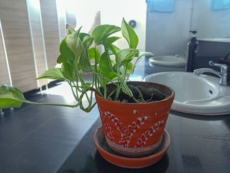 Ornamental plants in the bathroom Standard-Bild