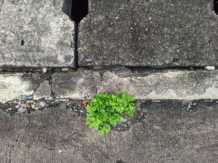 plant grew on the wall inside the drain