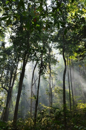 tropical rain forest Stock Photo - 12989295