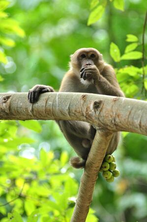 wildlife macaque in the nature Stock Photo - 13242776
