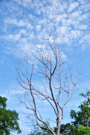 dry tree and blue sky photo