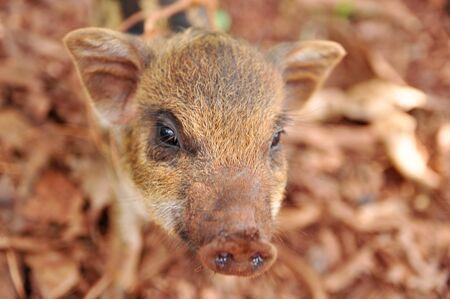 a cute pigs on a pigfarm , Thailand Stock Photo - 13862430