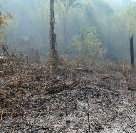 Burned forest in the Western Forest, Thailand photo