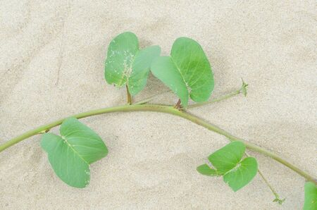 plant and leaf on the sand photo