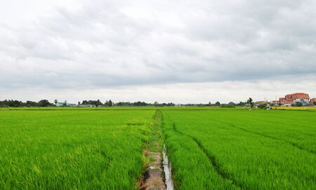 bl: Paddy field in the morning