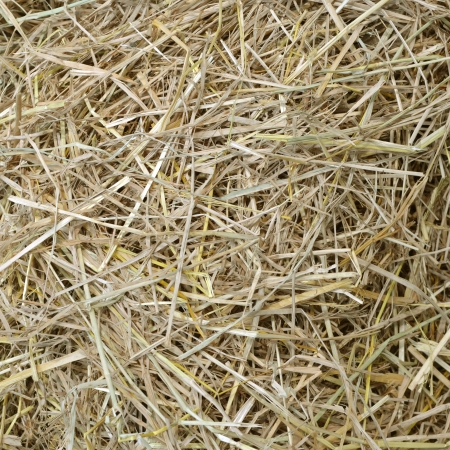 straw and hay texture background Stock Photo - 15881118
