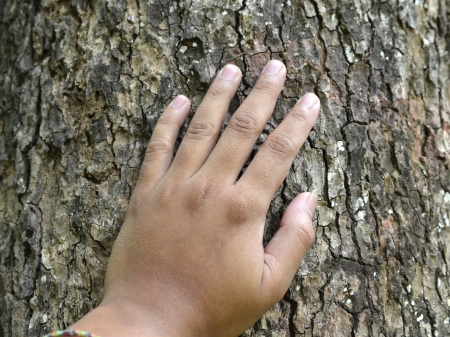 clinging: A hand, placed on the trunk