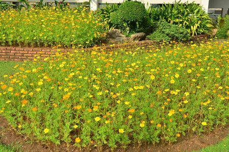 Yellow and Green Ornamental Garden Stock Photo - 16904351