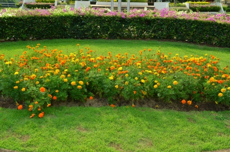 Yellow and Green Ornamental Garden photo
