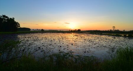colorful sunset over a wetland, with some wheats in the foreground photo