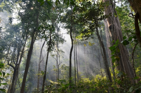 natural resource in tropical rain forest, Khao Yai National Park, Thailand Stock Photo