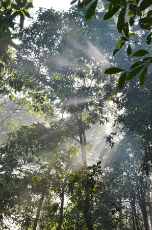 Morning in Rainforest photo