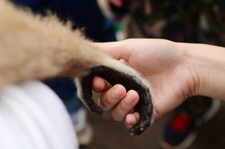 Monkey and human handshake Stock Photo - 17368505