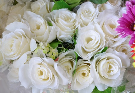 beautiful rose flowers for Valentine photo