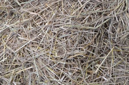straw and hay texture background Stock Photo - 17617557