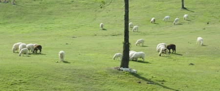 Sheep farm in South island, New Zealand. photo