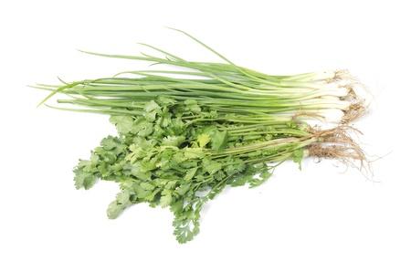 Fresh coriander and onion herb on white background Stock Photo - 17712292