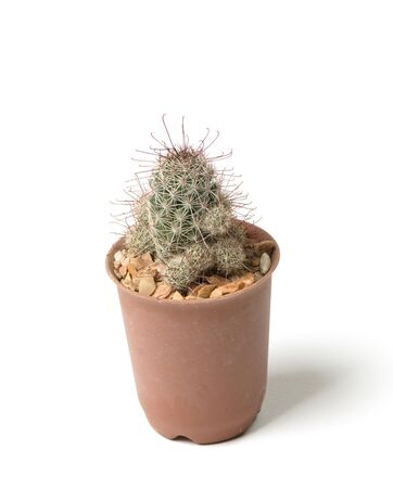 small cactus isolated on white background photo