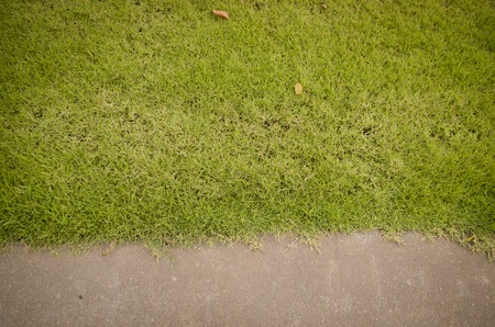 grass and road texture close-up photo