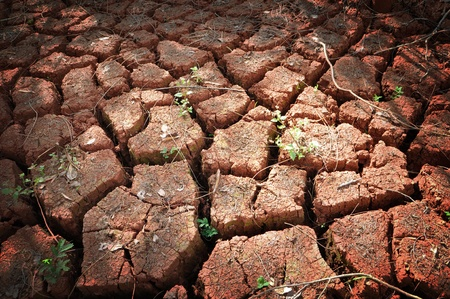 Dry cracked soil photo
