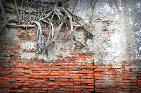 root wood covered brick wall photo