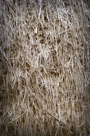 Straw texture background photo