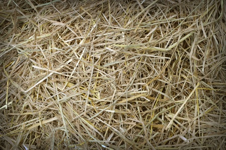 straw and hay texture background Stock Photo - 17980031