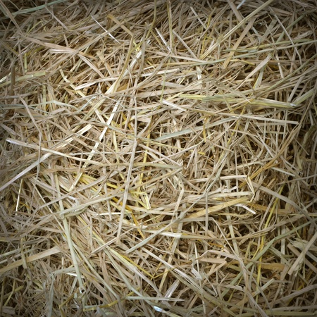 straw and hay texture background Stock Photo - 17979864