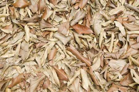 sear and yellow leaf: A lot of dry leaves lying on the ground Stock Photo