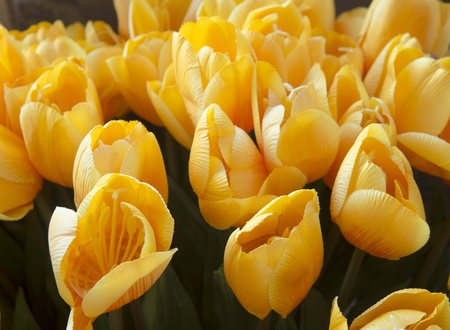 Beautiful tulips at Artificial flower shop photo