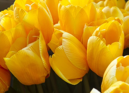 Beautiful tulips at Artificial flower shop Stock Photo - 18158303