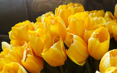 Beautiful tulips at Artificial flower shop Stock Photo - 18158198