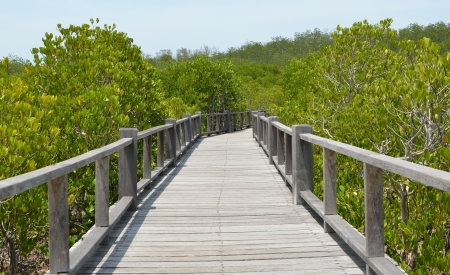 Boardwalk to the ocean photo