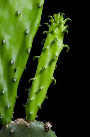 ampliar: Ampliar germina