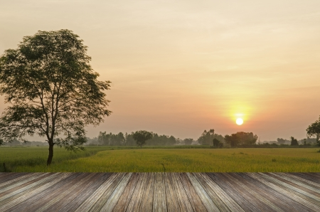 sunset over agricultural green field with wood planks floor Standard-Bild
